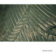 PALMA OLIVO